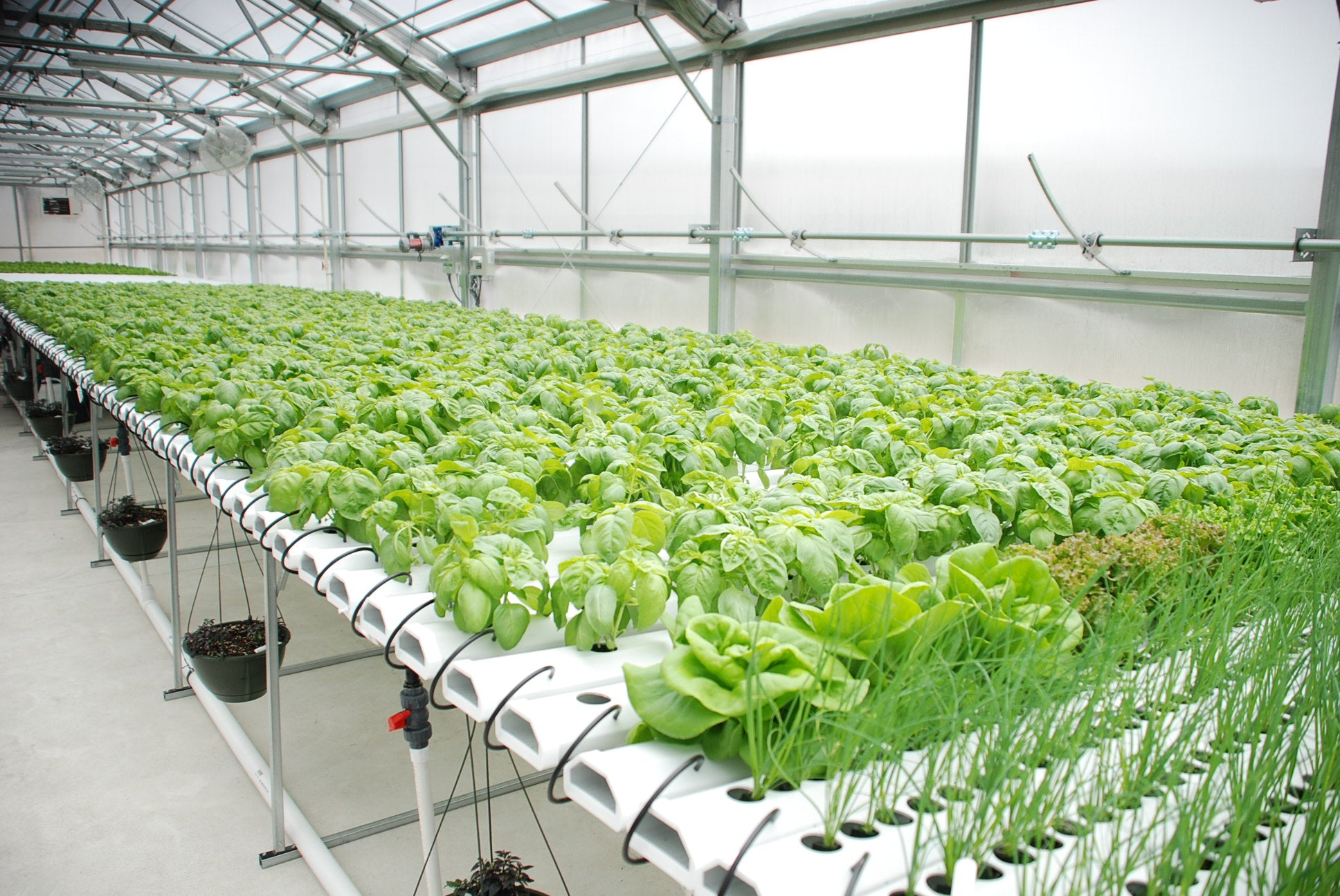 Everything You Need To Know About Hydroponics
