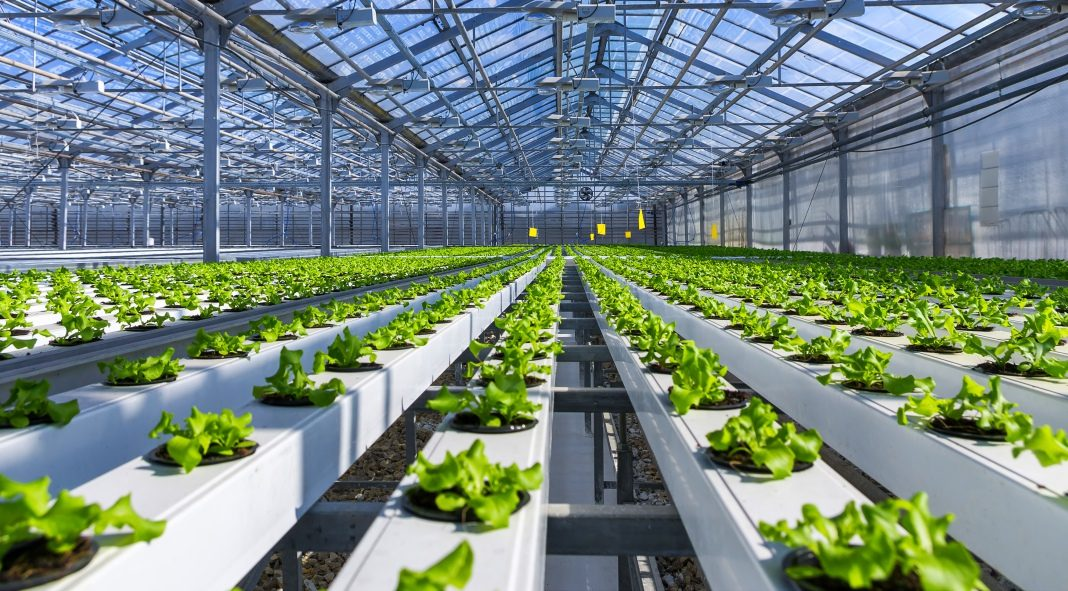30 Reasons Why Hydroponics Is Taking Over The World