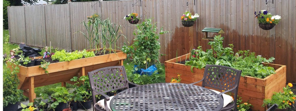 How Can We Grow Vegetables On The Balcony?