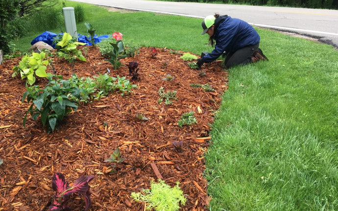 Garden: What You Need To Know About Mulching