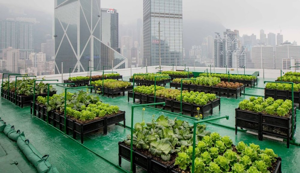 What Will Be The Future Of Agriculture?  - Urban Farming