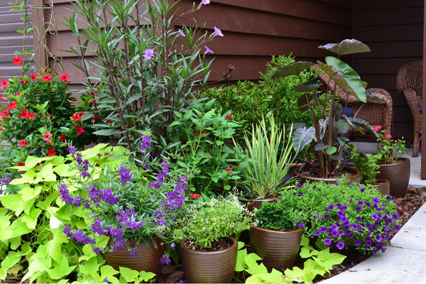 Good Planting Tips: Technique For Potted plants