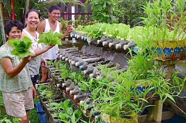 Urban Gardening - Changing Our Cities With Gardens