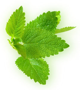 Grow Lemon Balm Plants