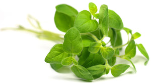 GROW OREGANO PLANTS