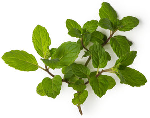 Grow Peppermint Plants