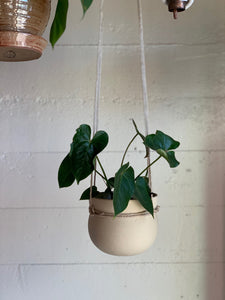 Clinched Hanging Planter