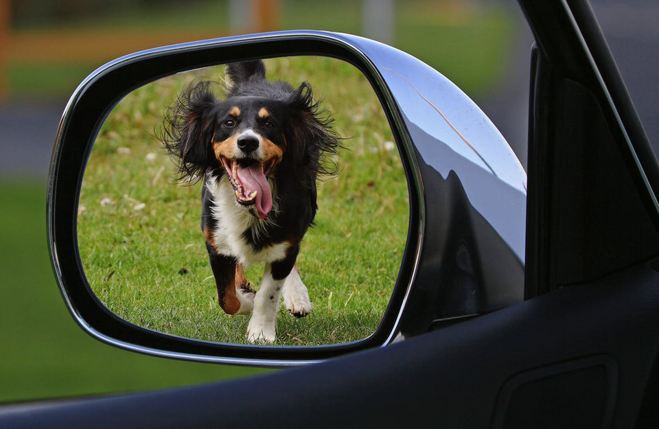 Behind The Wheel: 4 Car Safety Tips For Your Doggo