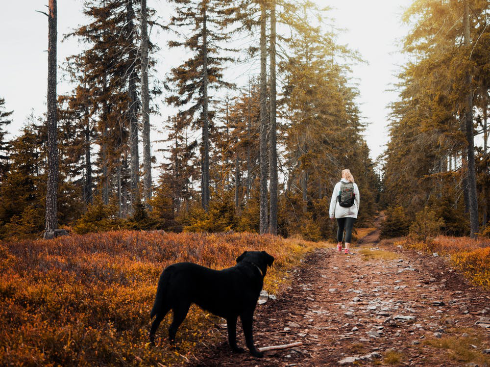 Camp It Up: Tips For Going Camping With Your Furry-Friend