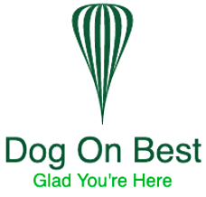 Dog On Best