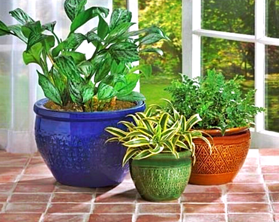 Ready™Jewel-Tone Flower Pot Ceramic Trio, Decrative Plant Pots