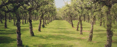 Apple Tree Pruning Course