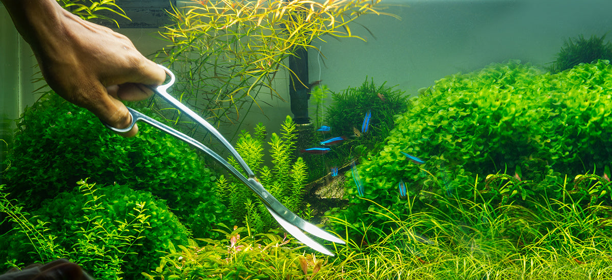 Aquascaping Tools