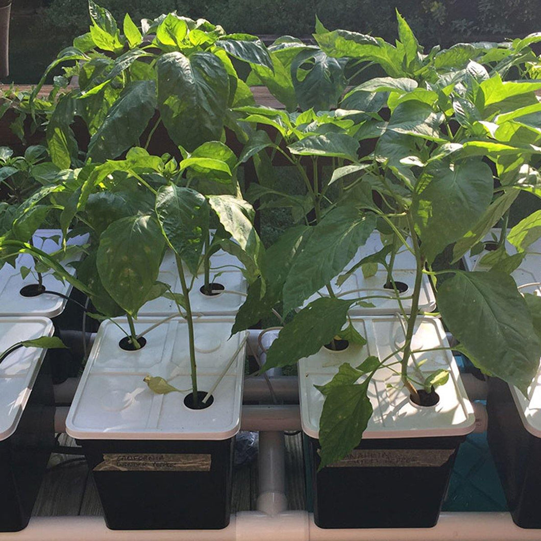 Hydroponic System, 8 Dutch Bucket
