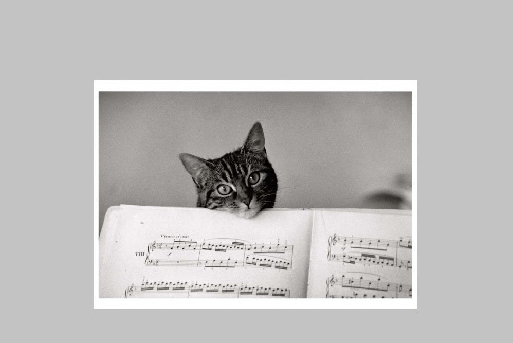 Cat with Sheet Music Card
