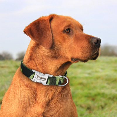 Personalized Dog Collar with Engraved Name Plate | Fits Medium Large Dogs 3 Sizes