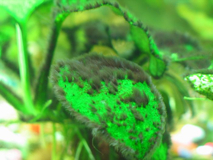 THE SOLUTION TO ALGAE IN AQUARIUMS