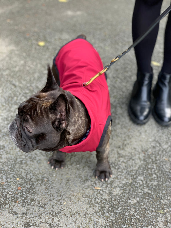 dogandhaf_red_dog_jacket_for_bulldog