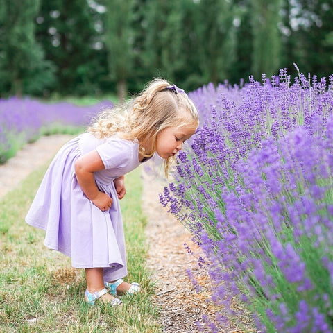 little blonde girl in lavender twirl dress smelling lavender flowers in a lavender field