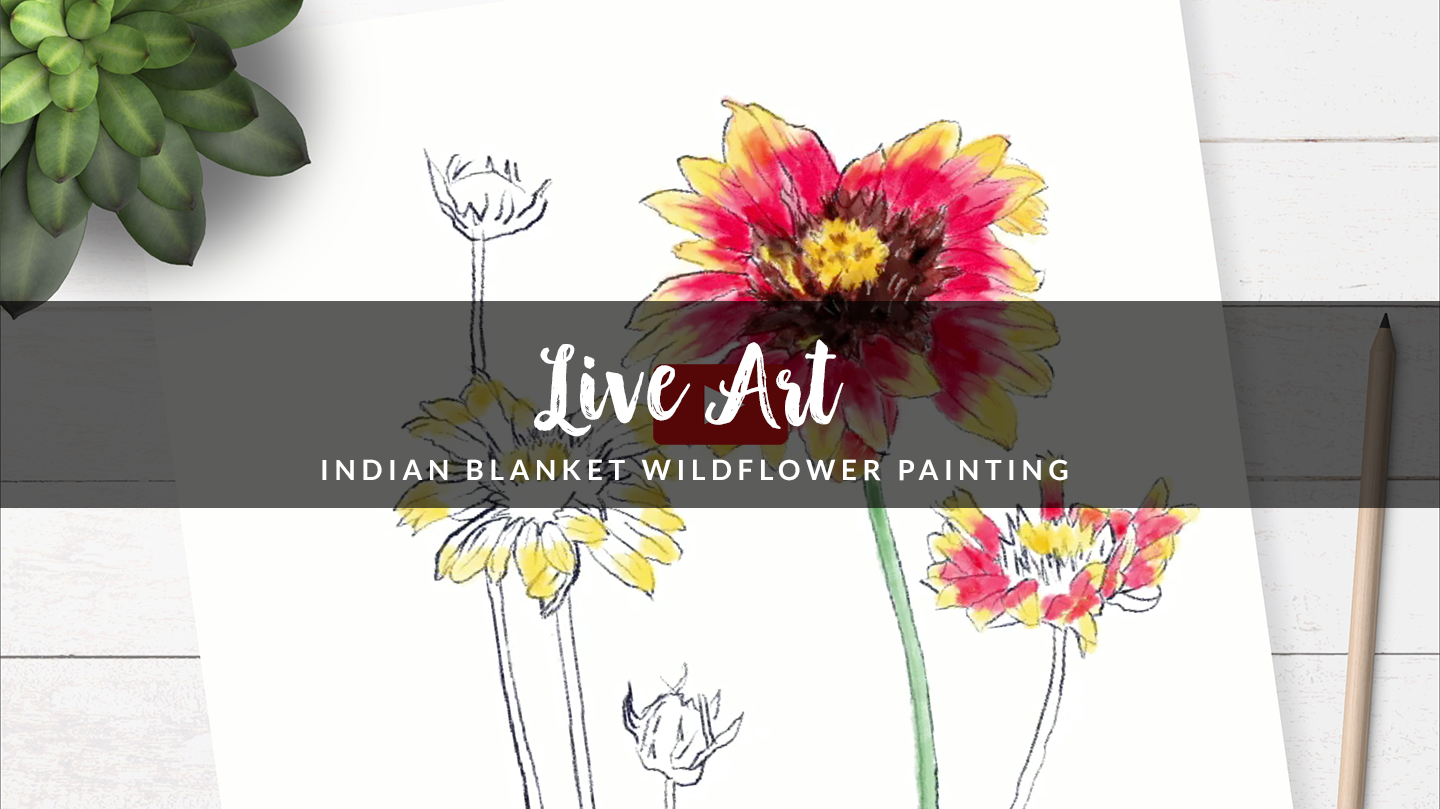 Texas Wildflower Watercolor Painting - Indian Blanket Flower