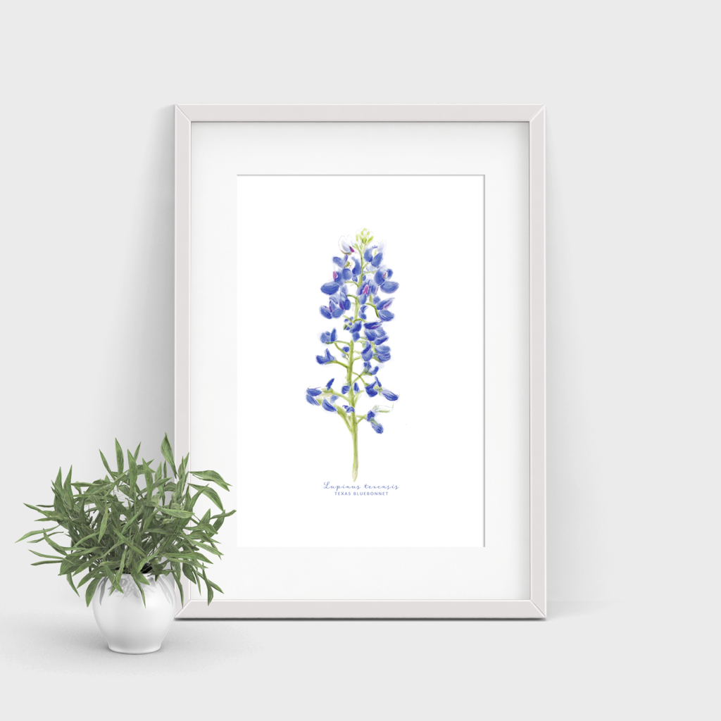 Texas Bluebonnet Watercolor Print