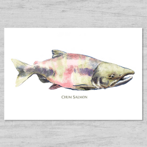 Chum Salmon Watercolor - New