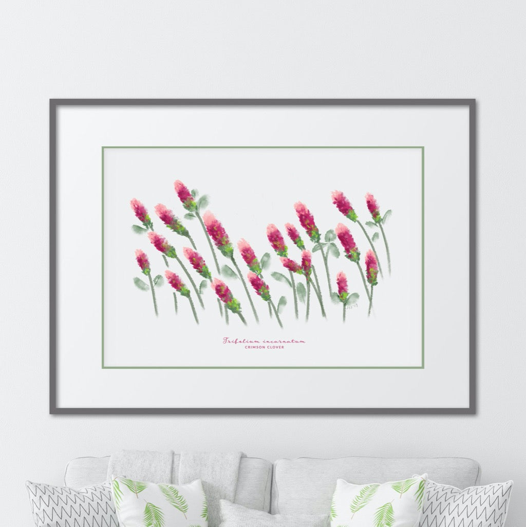 Crimson Clover Field Watercolor