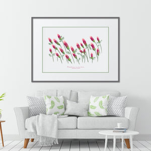 Crimson Clover Texas Wildflower Print