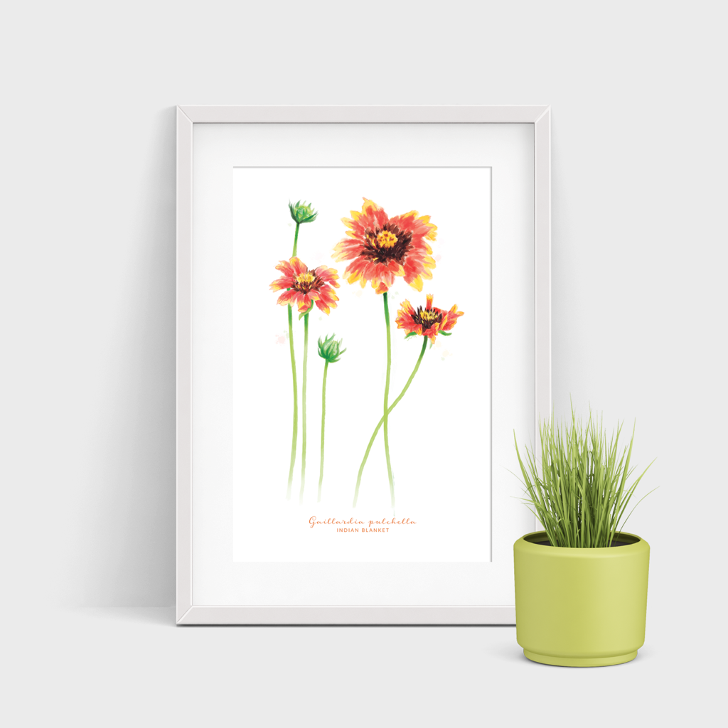 Indian Blanket Watercolor Print