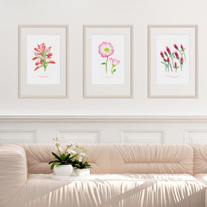 Texas Wildflowers Watercolor Print Collection