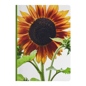 Sunflower from White - Paperback Notebook
