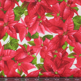 packed poinsettia