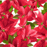 6 Christmas Themed Fabrics from the Poinsettia & Pine collection by Maywood Studio, Quilt Fabric Bundle, Red, Green, White, Black