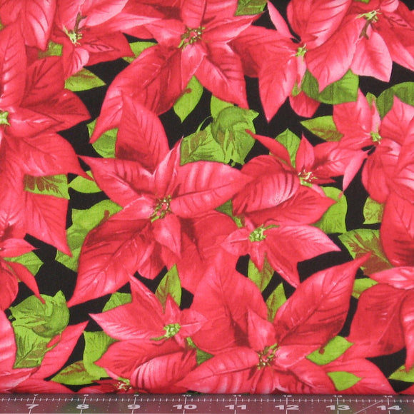 packed poinsettias