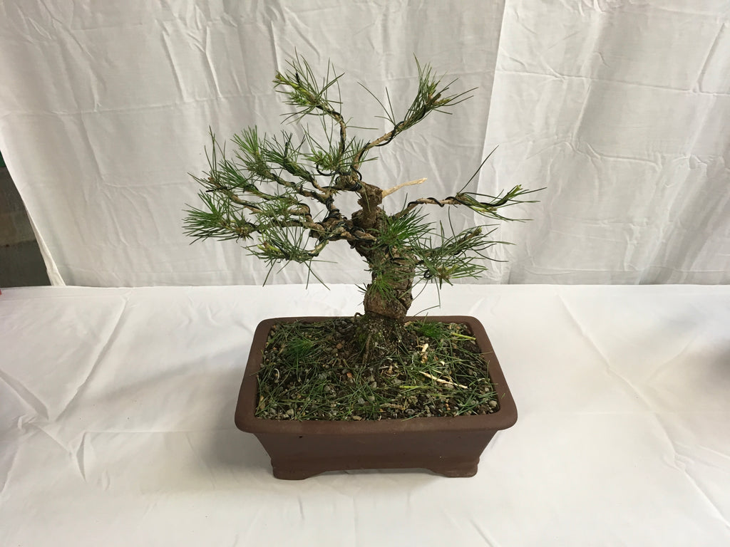 How to Train a Bonsai