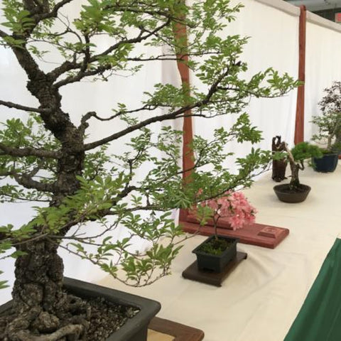 Bonsai Show - June 1-2