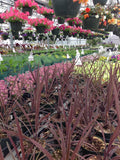 The Great Plant Sale - May 16-18