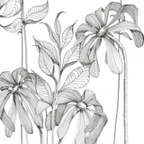 Botanical Line Drawing - Sept 10