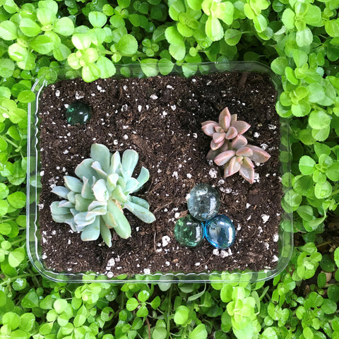 Hands-on Group Kit - Succulent Workshop