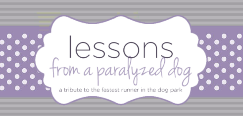 Lessons from a paralyzed dog article