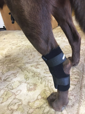 Hock Support Brace 15% off