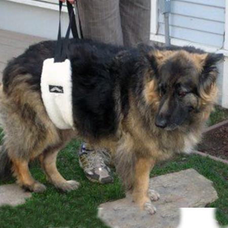 hoist about belly harness on german shepherd dog