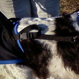 closeup of a suspender on a large dog