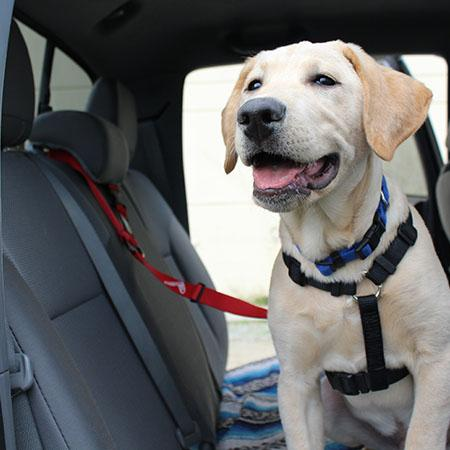 The Buddy Belt (pet safety seatbelt)