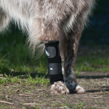 close up of carpal support brace on border collie mix