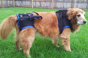 The Walkabout Harness Front and Rear Combination Harnesses