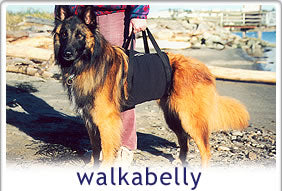 Walkabelly