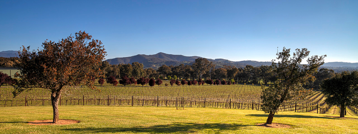 Gapsted Wines - Myrtleford Winery