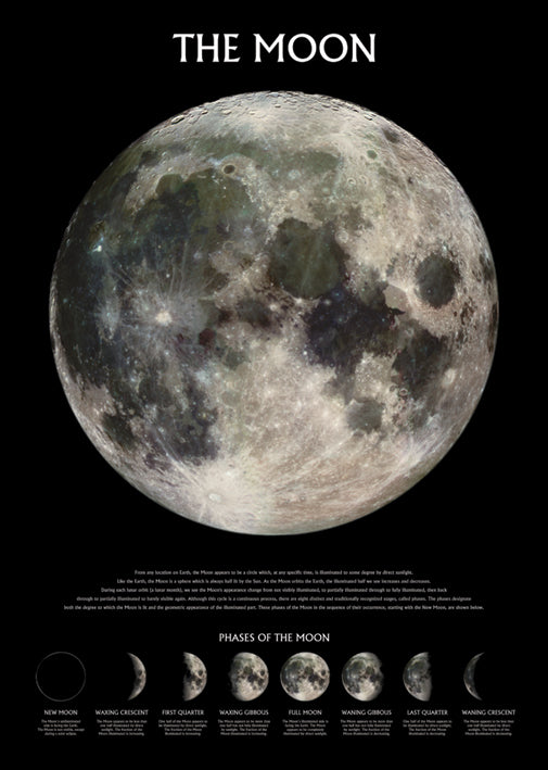 The Moon (Phases) Poster