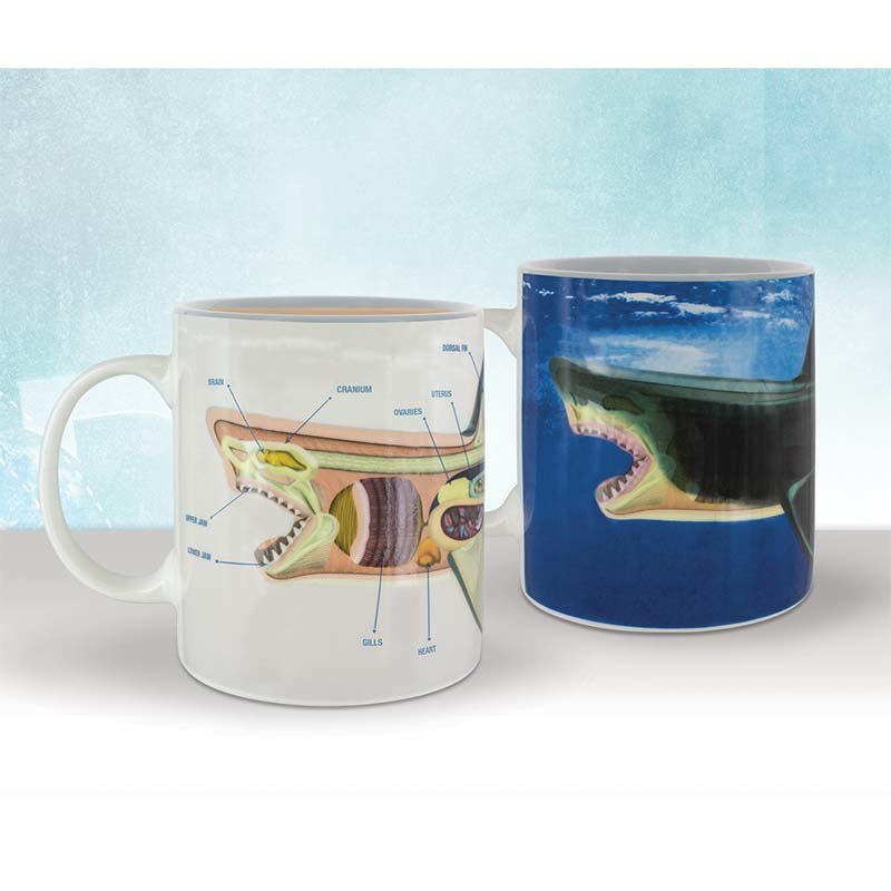 Discovery Channel Shark Anatomy Heat Change Mug